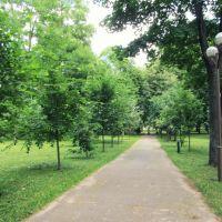 в парке, Барановичи