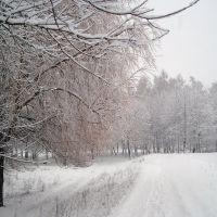 Зима (Winter), Береза