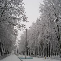 В парке зимой (Winter in the park), Береза