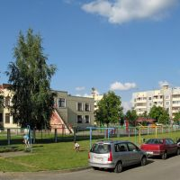 Северный городок, во дворе дома №71 (In the courtyard of Severny gorodok, 71), Береза