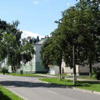 Северный городок (Severny gorodok), Береза