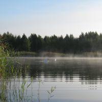 Утро на озере (Lake in the morning), Береза