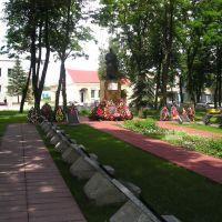 Комсомольский сквер, Береза Картуска