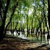 На реке Горынь, Давид-Городок
