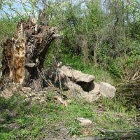 Остатки фундамента Нейдорфской кирхи (свезены в ров в марте 2008) 28.04.2008, Домачево