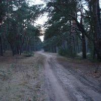 Дорога 10.12.2008г., Домачево