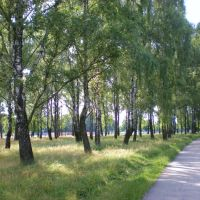 Берёзы в парке - Birch Trees in the park www.speakrussiannow.com, Жабинка