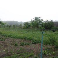 Огород Н.Ланец., Ивацевичи