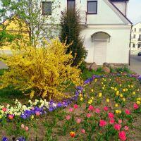 Весна в Кобрине, Кобрин