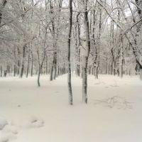 Зімой у кобрынскім парку, Кобрин