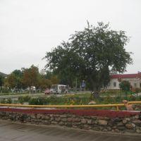 У цэнтры, каля кірмаша., Ляховичи