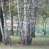 Бярозы, Минск