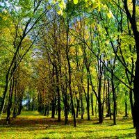 11.10.2012 14:07   Аллея в нижней части парка., Бешенковичи
