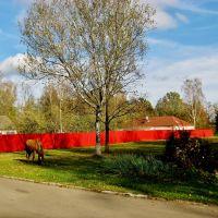08.10.2012 15:16  Улица Коммунистическая. По дороге к дубу Наполеона., Бешенковичи
