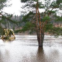 Река Двина. Паводок. Dvina River. Flooding., Верхнедвинск