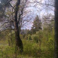природа парка, Верхнедвинск
