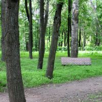 Karatkievič Park in Viciebsk (with sofa back leaned to the tree :), Витебск