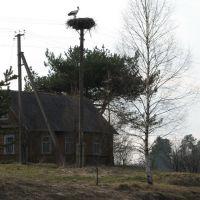 belorussian stork, Езерище