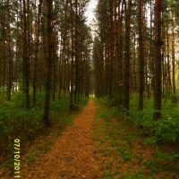 в парке, Новополоцк
