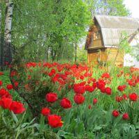 Подворье Спасо-Ефросиньевского женского монастыря в Полоцке, Беларусь, Полоцк