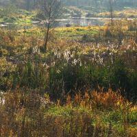Заболоченный пруд на реке Мяделка. Поставы. Swampy pond on the river Myadelka. Deliver., Поставы