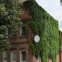 The green-house. Postavy Town (2010), Поставы