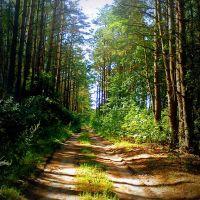 Лясная дарога ... Forest road, Белицк