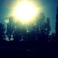 Праменьчыкі сонца скрозь дрэвы ... Rays of sun through the trees, Белицк