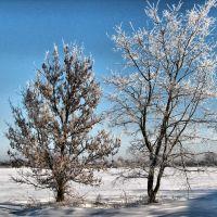 Зима 2011, Большевик