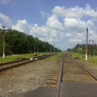 Железная дорога Гомель-Жлобин (на Жлобин), Большевик