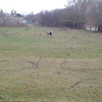 Аномалия на поле, Брагин