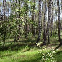 В лесу березки, Васильевка