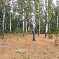 Лес рядом с дачами., Васильевка
