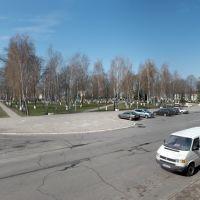 Сквер Public garden, Ветка