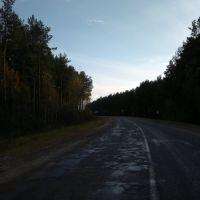 дорога Ветка-Светиловичи, Ветка