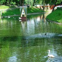 The Swan Pond., Гомель