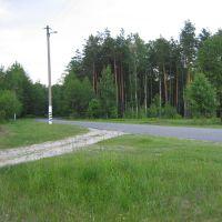 Дорога в центр Житкович из Соснового