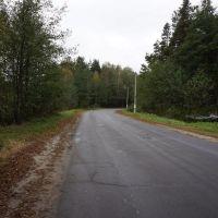 Дорога в Сосновый, Житковичи