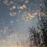 Летят утки..., Октябрьский