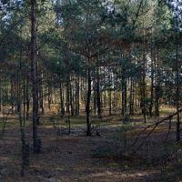 Весёлый лес, Октябрьский