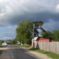 Stork on a tree, Светлогорск