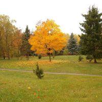 Около аграрного осенью, Гродно