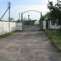 Former bakehouse, Желудок