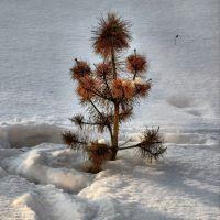 Маленькой ёлочке холодно зимой..., Зельва