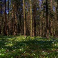 весенние цветы, Козловщина