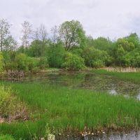 Пруд по ул. Скарыны (Pond on the Skaryna st.), Островец