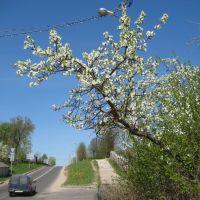 Весна, Ошмяны