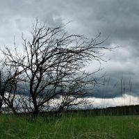 Lonely Tree, Сморгонь