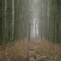 Туманное утро. Foggy morning., Сморгонь