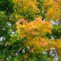 Осенние листья, Вилейка